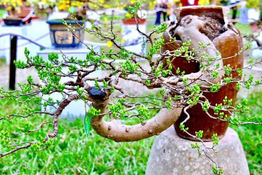 Mãn nhãn với kỳ hoa dị thảo tại Hội Hoa Xuân Tao Đàn - Ảnh 11.