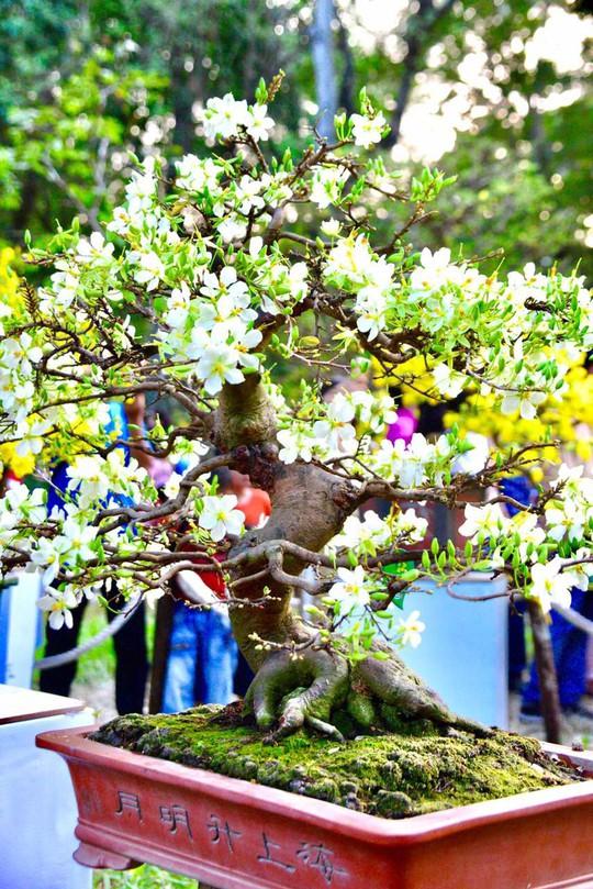 Mãn nhãn với kỳ hoa dị thảo tại Hội Hoa Xuân Tao Đàn - Ảnh 10.
