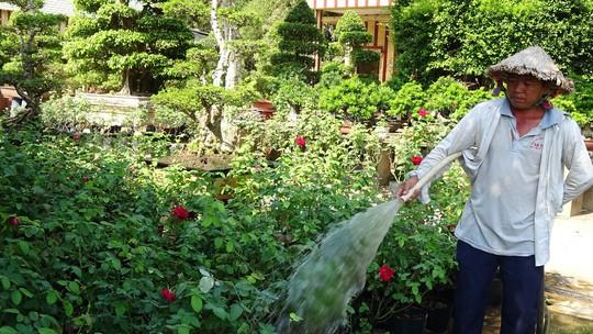 Du Xuân ngắm vườn hoa hồng lớn nhất miền Tây - Ảnh 3.