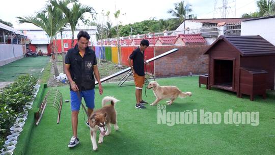 Độc đáo khu phức hợp tiện nghi có massage dành cho chó cưng - Ảnh 9.