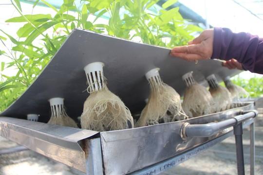 """Đầu năm, thăm trang trại rau sạch ở """"đảo ngọc"""" Phú Quốc - Ảnh 3."""