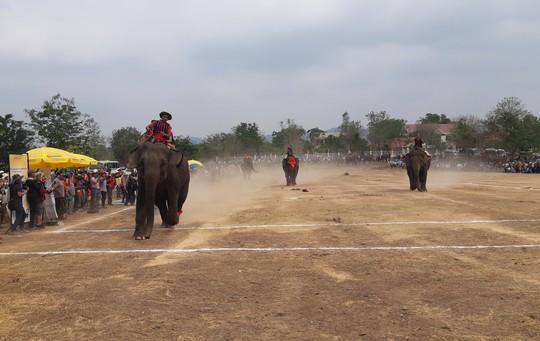 Hàng ngàn người đội nắng xem voi dự tiệc buffet, đá bóng, chạy đua - Ảnh 3.