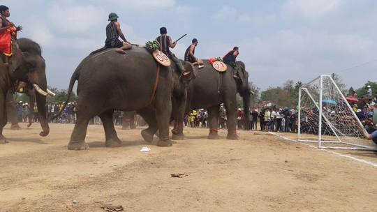 Hàng ngàn người đội nắng xem voi dự tiệc buffet, đá bóng, chạy đua - Ảnh 12.