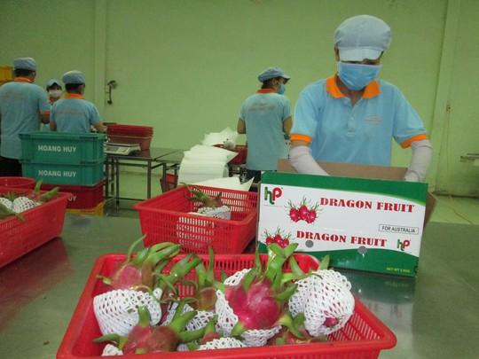 Xuất khẩu rau quả còn quá khiêm tốn - Ảnh 1.