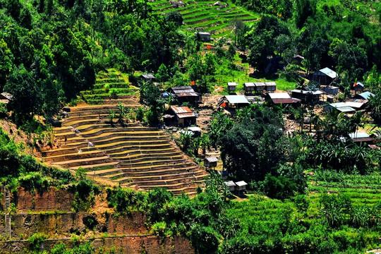 Quảng Nam có điểm du lịch sâm Ngọc Linh độc đáo, hoàn toàn miễn phí - Ảnh 8.