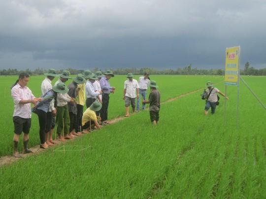 Bình Điền đưa nông dân tham dự khóa tập huấn tại Thái Lan - Ảnh 3.