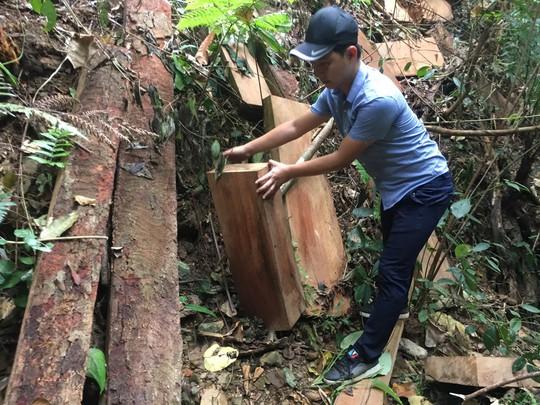 Cận cảnh khu rừng gỗ quý ở Quảng Bình bị lâm tặc chặt phá tan hoang - Ảnh 5.