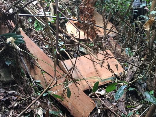 Cận cảnh khu rừng gỗ quý ở Quảng Bình bị lâm tặc chặt phá tan hoang - Ảnh 13.
