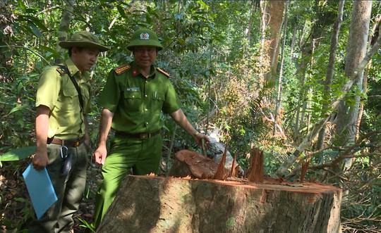 Giám đốc Công an tỉnh Đắk Lắk băng rừng bắt gỗ lậu - Ảnh 10.