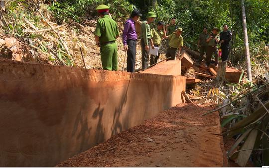 Giám đốc Công an tỉnh Đắk Lắk băng rừng bắt gỗ lậu - Ảnh 4.
