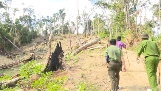 Giám đốc Công an tỉnh Đắk Lắk băng rừng bắt gỗ lậu - Ảnh 11.
