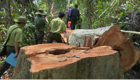Giám đốc Công an tỉnh Đắk Lắk băng rừng bắt gỗ lậu - Ảnh 2.