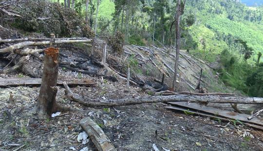 Giám đốc Công an tỉnh Đắk Lắk băng rừng bắt gỗ lậu - Ảnh 12.