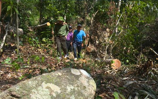 Giám đốc Công an tỉnh Đắk Lắk băng rừng bắt gỗ lậu - Ảnh 6.