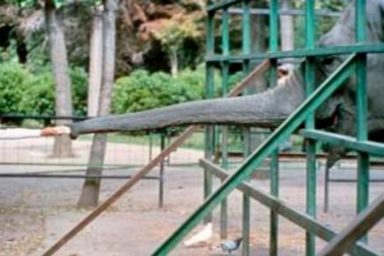 Con voi buồn nhất thế giới qua đời sau 43 năm bị nhốt - Ảnh 2.