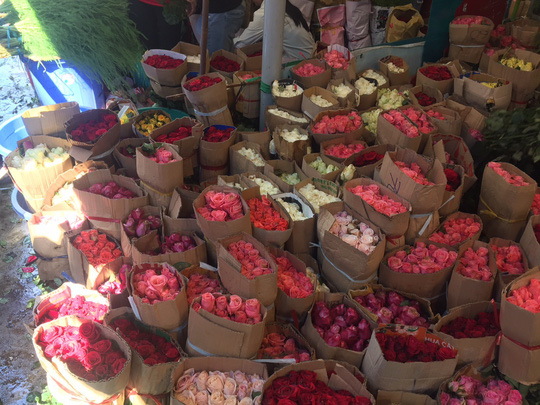 Chưa đến 8-3, giá hoa hồng ở TP HCM đã tăng chóng mặt