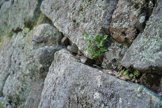 Thành cổ hơn 400 năm ở Nhật ngập trong sắc hoa anh đào - Ảnh 5.