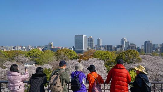 Thành cổ hơn 400 năm ở Nhật ngập trong sắc hoa anh đào - Ảnh 8.