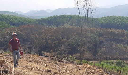 Chặt phá hơn 50 ha cây trồng của doanh nghiệp để gây sức ép với chính quyền? - Ảnh 4.