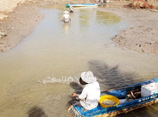 Ngợp với cảnh mỏi tay vớt cá dạt vào bờ ở Cà Mau, Bạc Liêu - Ảnh 2.