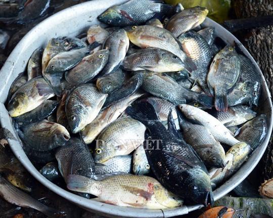Ngợp với cảnh mỏi tay vớt cá dạt vào bờ ở Cà Mau, Bạc Liêu - Ảnh 7.