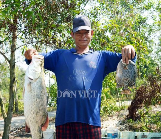Ngợp với cảnh mỏi tay vớt cá dạt vào bờ ở Cà Mau, Bạc Liêu - Ảnh 8.