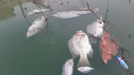 Đà Nẵng: Gần 2 km kênh đổi màu bất thường, kèm hiện tượng cá chết - Ảnh 2.