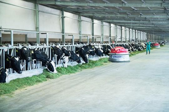 """""""Resort"""" bò sữa - ngôi nhà lý tưởng của những cô bò hạnh phúc - Ảnh 4."""