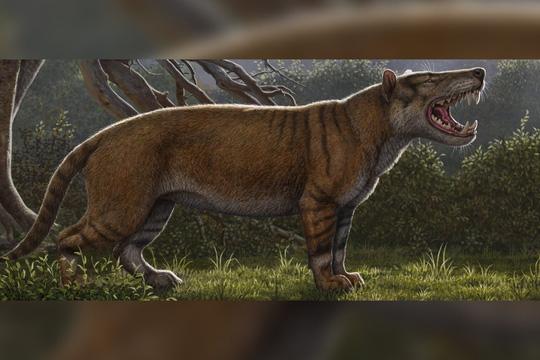 Phục dựng quái thú bí ẩn răng sói, mình sư tử, sọ như tê giác - Ảnh 2.