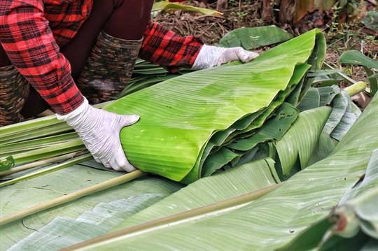 Lá chuối thay nilon, người dân kiếm bạc triệu từ nghề chặt lá chuối - Ảnh 6.