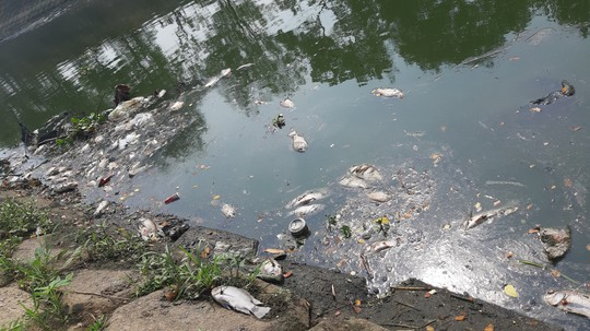 Đà Nẵng: Cá chết trắng kênh cạnh trạm xử lý nước thải - Ảnh 2.