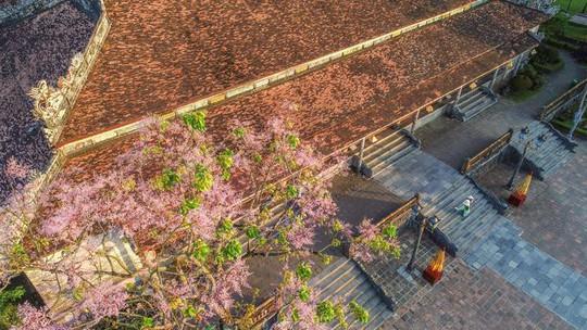 Những loài hoa khoe sắc trong nắng hạ ở Huế - Ảnh 3.