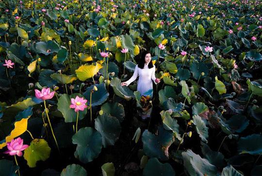 Những loài hoa khoe sắc trong nắng hạ ở Huế - Ảnh 8.