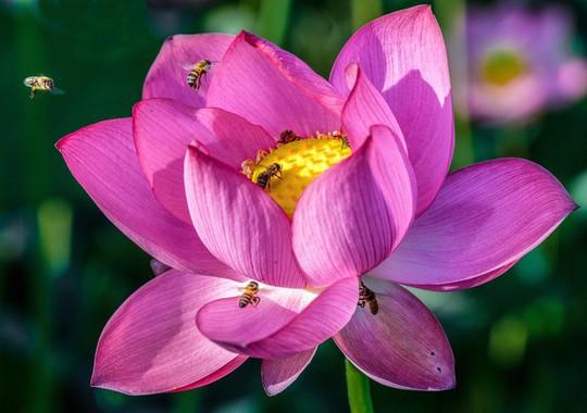Những loài hoa khoe sắc trong nắng hạ ở Huế - Ảnh 9.