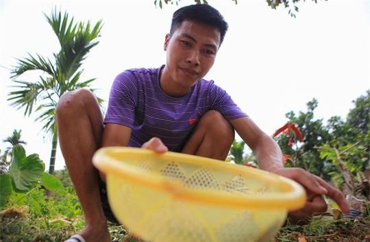Săn trứng kiến làm món ăn đặc sản ở ngoại thành Hà Nội - Ảnh 7.