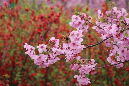 Ngắm con đường hoa anh đào dài nhất thế giới tại Nhật Bản - Ảnh 15.