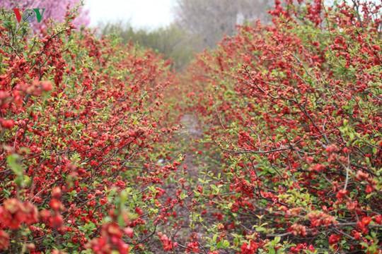 Ngắm con đường hoa anh đào dài nhất thế giới tại Nhật Bản - Ảnh 18.