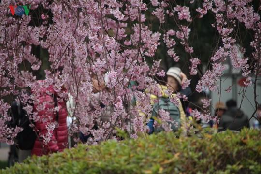 Ngắm con đường hoa anh đào dài nhất thế giới tại Nhật Bản - Ảnh 9.