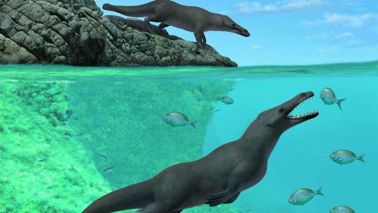 Cá voi 4 chân được tìm thấy ở Peru - Ảnh 1.