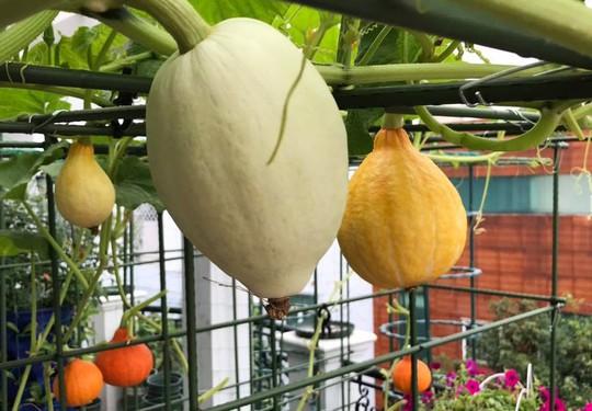 Gia đình ở TP HCM bị nhầm là trồng rau đột biến vì quá tốt - Ảnh 2.