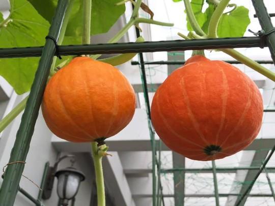 Gia đình ở TP HCM bị nhầm là trồng rau đột biến vì quá tốt - Ảnh 13.