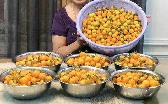 Gia đình ở TP HCM bị nhầm là trồng rau đột biến vì quá tốt - Ảnh 3.