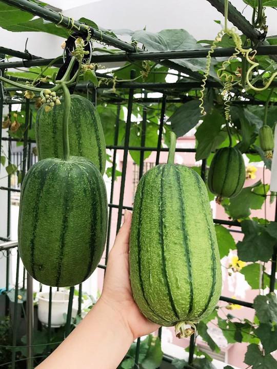 Gia đình ở TP HCM bị nhầm là trồng rau đột biến vì quá tốt - Ảnh 9.