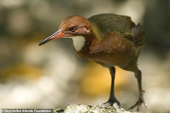 Bí ẩn loài chim xuất hiện sau 136.000 năm tuyệt chủng - Ảnh 3.