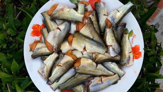 Hương vị quê hương: Cá ngạnh chình ình bụng trứng - Ảnh 1.