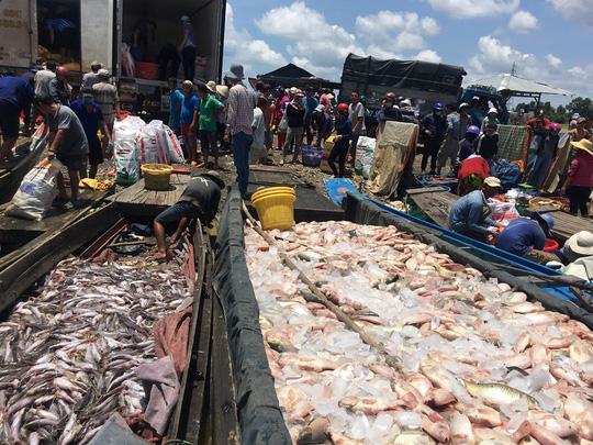 Ám ảnh hàng trăm tấn cá phơi bụng trên sông La Ngà - ảnh 1