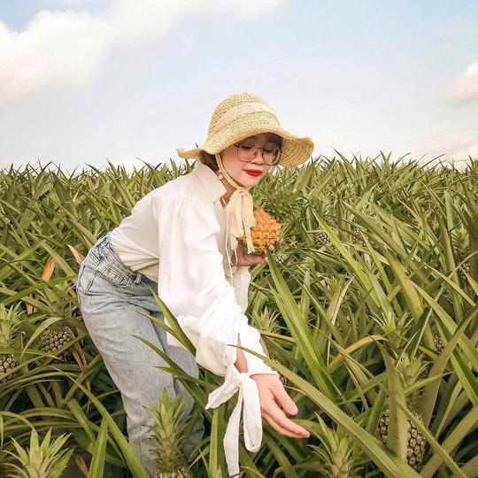 Cánh đồng dứa hút giới trẻ check-in ở Ninh Bình - Ảnh 4.