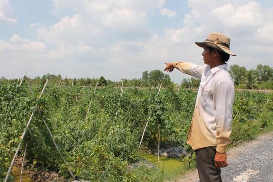 """Quỹ David Dương: """"Một vốn bốn lời"""" cho nhà nông - Ảnh 2."""