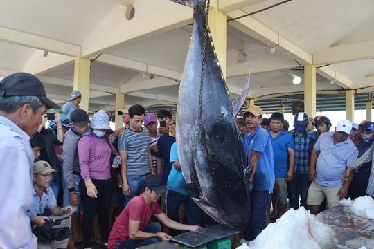 Ngư dân Phú Yên câu được cá ngừ vây xanh 'khủng'