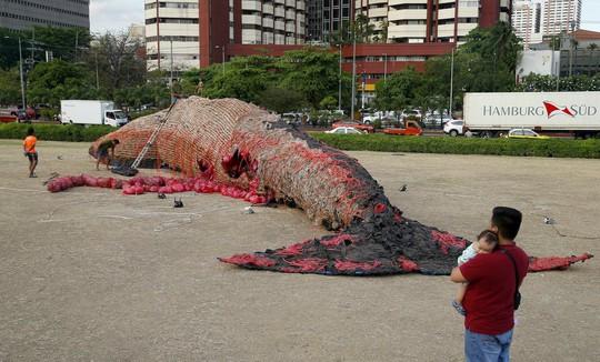 """Thông điệp từ """"Tiếng khóc của cá voi chết"""" - Ảnh 1."""